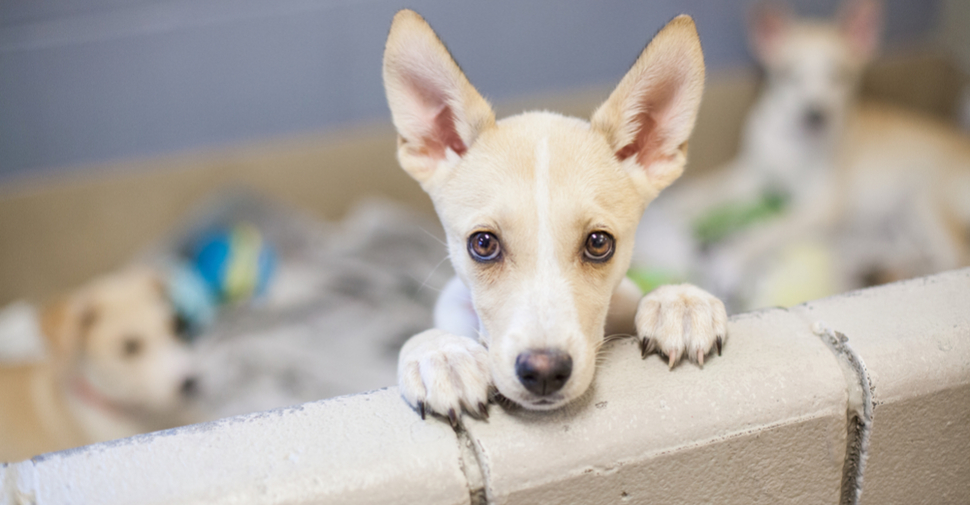 Things To Focus On Before Choosing Your Dream Puppy